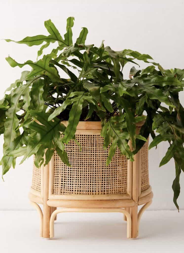 beautiful cane planter