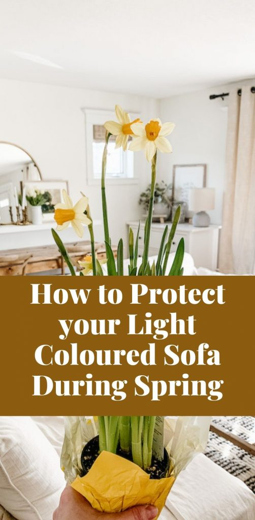 this is a pinterest pin for how to protect your light coloured sofa during spring wit pets